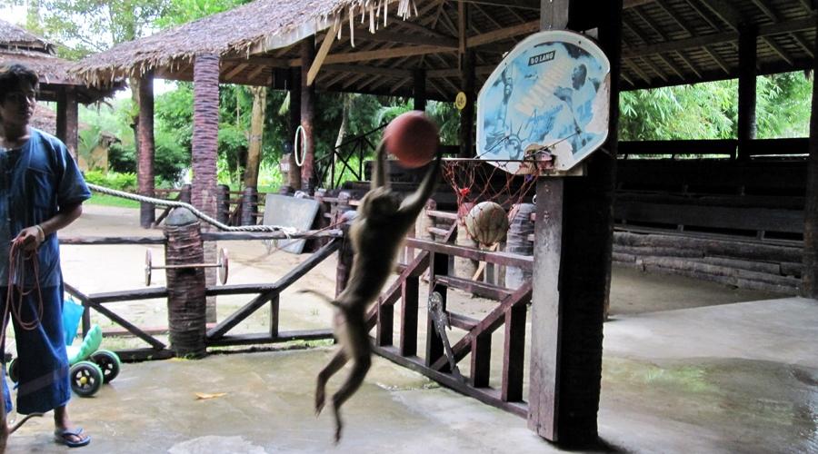 ECO Safari Tour อาบน้ำให้ช้าง