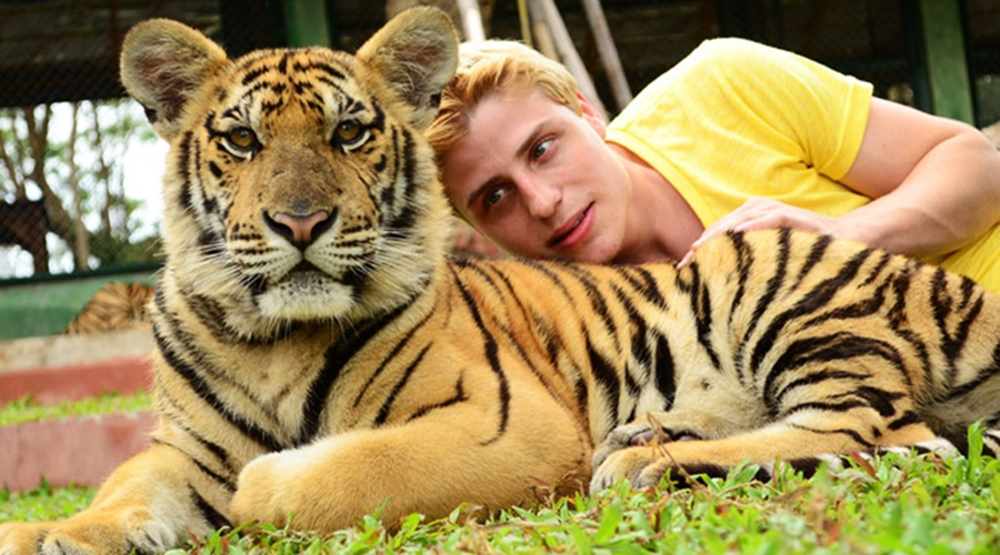 สวนเสือภูเก็ต- ไทเกอร์ คิงส์ดอม- Tiger Kingdoms ลูกเสือขนาดเล็ก
