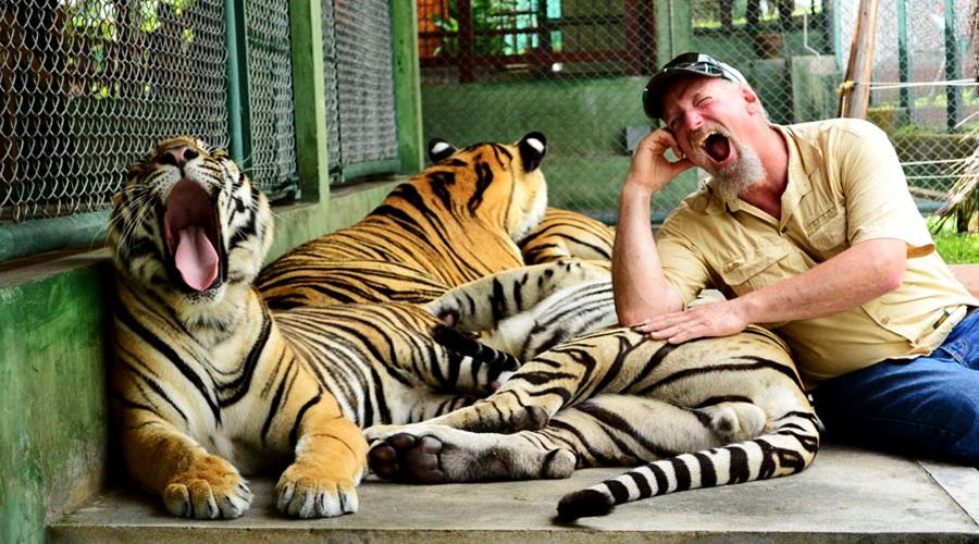 สวนเสือภูเก็ต- ไทเกอร์ คิงส์ดอม - Tiger Kingdoms  เสือโตปานกลาง