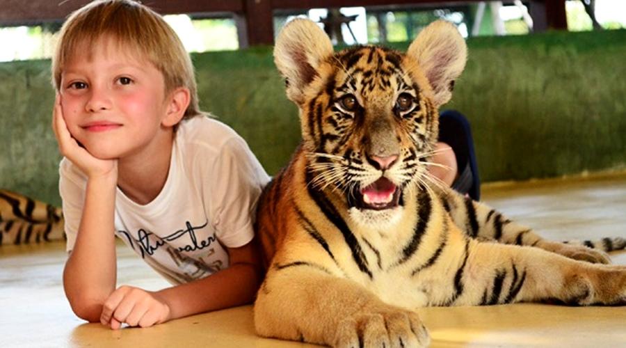 สวนเสือภูเก็ต - ไทเกอร์ คิงส์ดอม-Tiger Kingdoms ลูกเสือขนาดเล็กสุด